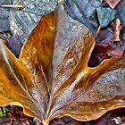 Winter Leaf by Cee Neuner