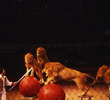Circus by SlidingPhotos