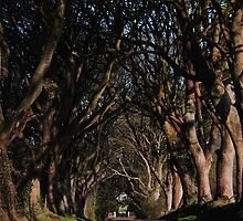 Dark Hedges Canopy by Wrayzo