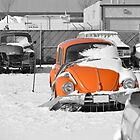 Orange Bug by rosaliemcm