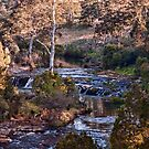 At Dangar Falls by jayneeldred