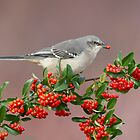 Northern Mockingbird and berries by (Tallow) Dave  Van de Laar