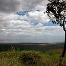 Ngorongoro Tree by phil decocco
