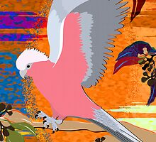 Galah Sunrise 5 by Graham Colton