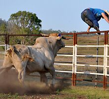 Rodeo, Cowboy Up. by Barbara  Jean
