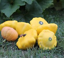 Squash harvest by Shelomi Doyle