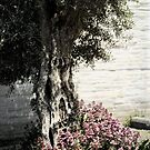Mission San Jose Tree dedicated to the Ohlones by Ellen Cotton