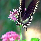 Black swallowtail by ♥⊱ B. Randi Bailey