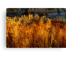 Flaming Grass Canvas Print
