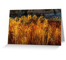 Flaming Grass Greeting Card
