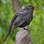Little brown bird on a branch by Jan Pudney