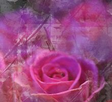 Rose Abstract by MQ20