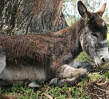 Donkey Beside a Tree by rhamm