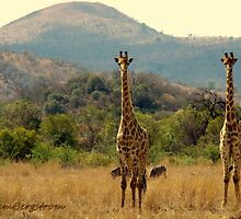 South African Safari  by Susan Bergstrom