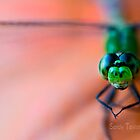 Dragonfly on a pumpkin by Sandy  Taylor Photography