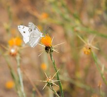 White Butterfly by NiloB123