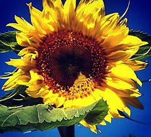 Sunflower Home Grown by angbet31