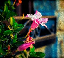 Pink Flower by NiloB123