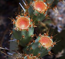 Prickly Pear by Leyla Hur