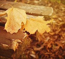 Autumn Leafs by afeimages