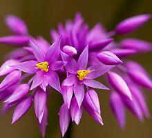 Purple Tassels by Ken Watt Photography