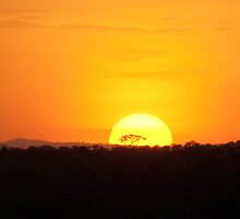 African Sunset by phil decocco