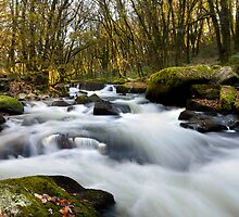 Golitha falls Cornwall UK by stevieuk