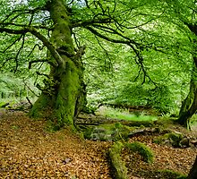 Woodland Scene, UK by Heidi Stewart