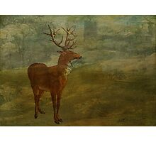 Looking for Landseer Photographic Print
