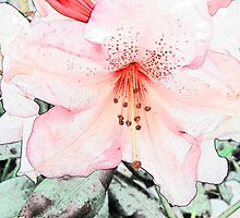 Pink rhododendron, azalea flower photo art. color pencil sketch style. by naturematters
