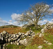 Lone tree on Dartmoor by peteton