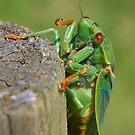 Cicada on a Post by Cole Stockman
