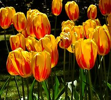 Tulip Balloons by Gabrielle  Lees