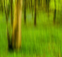 Spring Woodland Abstract by Nick Jenkins