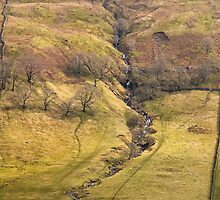 Gill in Littondale  by Nick Jenkins