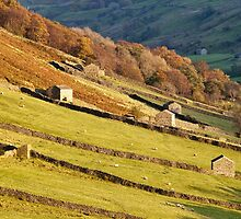 Dales Barns Above Muker by Nick Jenkins