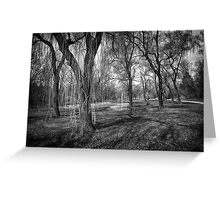 Willows in spring park Greeting Card