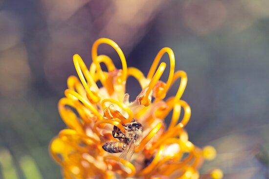 Technicolour Bee by Josie Eldred