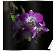 Purple Orchids Front View Poster