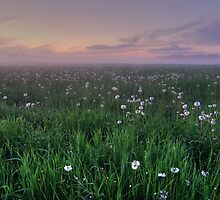 Dandelion heaven  by Jean-Paul Boudreau