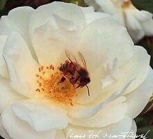 Rose and Bee by James Toh