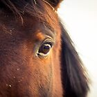 Eye of horse by netza