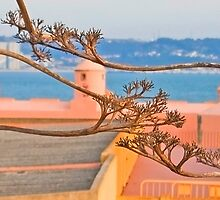 sto amaro branches by terezadelpilar~ art & architecture