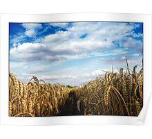 Wheat Field - (Steeple Mordern, Hertfordshire) Poster