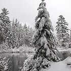 Winter in Algonquin  by Dawne Olson