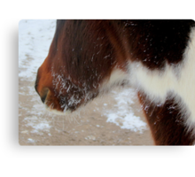 A Cold Morning For Bo Canvas Print