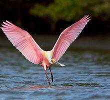 Pink display by Steven Blandin