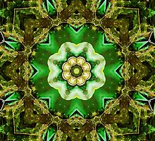Nature's Kaleidoscope by Jordan Blackstone