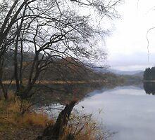 Still Loch Ard, Scotland by Pete Johnston