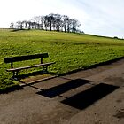 Bench Shadow And Trees by Jazzdenski